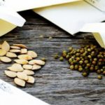 Как правильно собрать семена овощей с огорода и хранить их в домашних условиях
