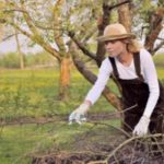 Как правильно подготовить садовые деревья и кустарники к зиме