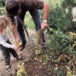 Как сохранить морковь и свеклу до весны свежими без подвала