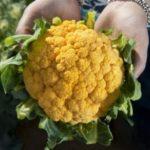 Новинка - гибрид цветной капусты и брокколи, называется броккаули