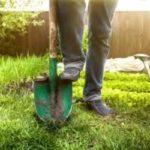 Как быстро посадить чеснок в зиму