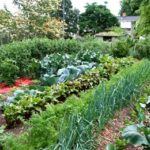 Севооборот овощей на дачном участке - что после чего можно сажать на огороде
