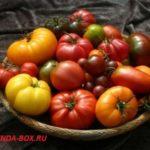 Новые сорта и гибриды томатов на 2017 год для теплиц и открытого грунта
