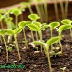 Как повысить всхожесть семян перцев, томатов, огурцов, баклажан и моркови