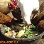 Пищевые добавки для яйценоскости кур несушек