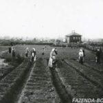 Как в старину готовили семена к посадке