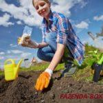 Ошибки при посеве семян и рассады