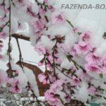 Как спасти цветущий сад от весенних заморозков