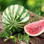 Спелый арбуз – признаки и правила выбора