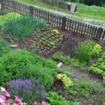Насколько выгодно выращивать зелень на огороде