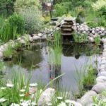 Разведение карася в садовом пруду