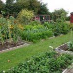 Севооборот овощных культур на дачном участке – таблица
