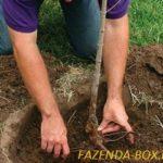 Как правильно посадить плодовое дерево в Подмосковье – яблоню, грушу, сливу и вишню