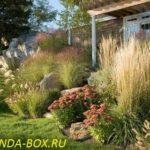 Декоративные злаки и травы в ландшафтном дизайне - фото и названия