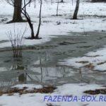 Чем опасна зимняя оттепель для плодовых деревьев
