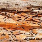 Как бороться с жуками точильщиками в деревянном доме