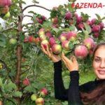 Карликовые и полукарликовые яблони для Подмосковья