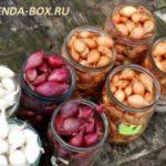 Как выбрать лук севок для посадки весной
