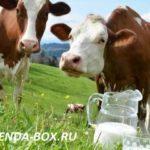 Выгодно ли завести корову в подсобном хозяйстве и с чего начать