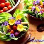 Съедобные цветы для салатов и украшения блюд