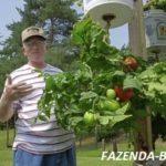 Выращивание томатов вверх корнями