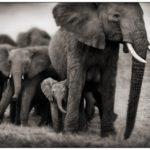 Африка Ника Брандта (Часть 2)