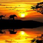 Лучшее об Африке на «Моей Планете»