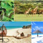 Забронируй отель на Занзибаре, и получи второй номер абсолютно бесплатно от FIVE STARS TRAVEL AGENCY