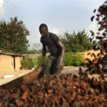 Горечь африканского шоколада