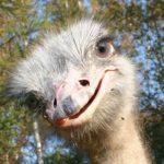 Страус самая крупная нелетающая птица! 7 мая едим в замок Манук Бея + Страусиная Ферма