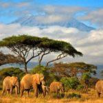 Африка !!!!🏞🏝Танзания остров Занзибар — там Вы еще не бывали !!!🦒🐘🦓🐊🦀